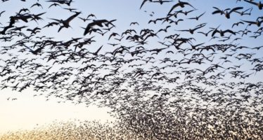 Conservación de especies migratorias y poblaciones transfronterizas