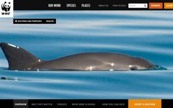 WWF: Vaquita Marina