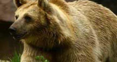 El Comité Trilateral para la Conservación y Manejo de la Vida Silvestre y los Ecosistemas