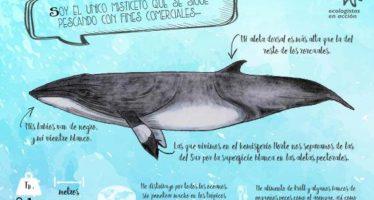 Colección de fichas de identificación de Cetáceos