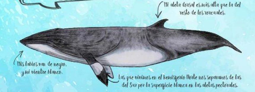 Ecologistas en Acción impulsa campaña de educación ambiental sobre cetáceos españoles