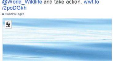 Datos y discurso de Enrique Peña Nieto a Leonardo DiCaprio, quien exigió evitar la extinción de la vaquita marina