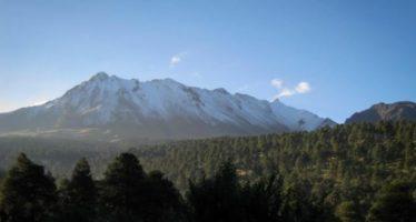Change.org: Frenar la autorización de la tala de 33 % del bosque del Nevado de Toluca