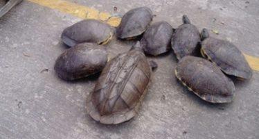 Se decomisan ejemplares de diversas especies durante Operativo Frontera Sur 2017