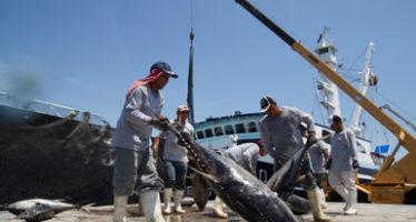 Producción agropecuaria y pesquera de México supera las 220 millones 540 mil toneladas en 2016