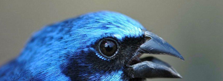 """Día Mundial de las Aves Migratorias: """"su futuro es nuestro futuro"""", acepta el gobierno mexicano"""