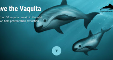 Save the Vaquita