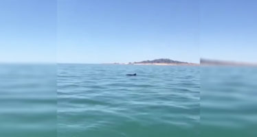 Video de dos vaquitas marinas (Phocoena sinus), muy cerca del puerto de San Felipe, Baja California