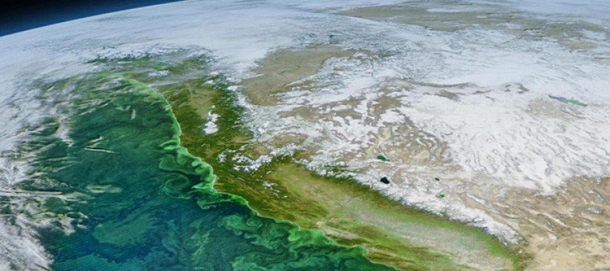 Descubren qué provocó la proliferación de algas 'zombi' en California
