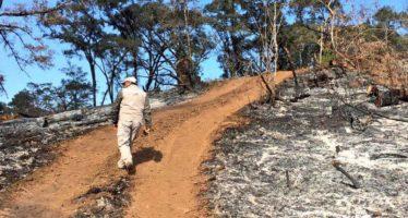 Trabajan en restauración de zonas forestales afectadas por cambio ilegal de uso de suelo