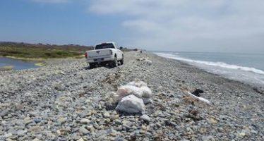 Cancelan aprovechamiento de piedra en una playa de Ensenada, BC