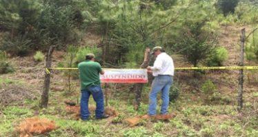 Detienen avance de huertas ilegales de aguacate, durazno, lima, granada, chile manzano y nopal en reserva de mariposa monarca