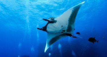 Sostenibilidad de los océanos, prioridad de gobiernos y sociedades del mundo: Día Mundial de los Océanos