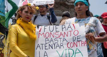Opositores a soya transgénica denuncian intimidación en Campeche