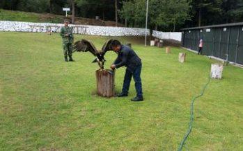 Avanza creación del Centro Nacional de Control y Protección del Águila Real (Aquila chrysaetos)