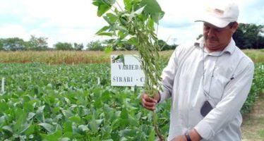 CDI y Cibiogen sabotean consulta sobre soya transgénica en Campeche y Yucatán