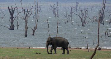 """""""Aniquilación biológica mundial"""": El planeta entra en una sexta extinción en masa"""
