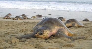 En México existen playas limpias que pueden disfrutarse y que deben conservarse