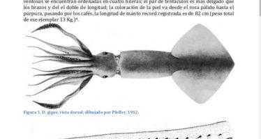 Descripción biológica, ecológica y análisis del Calamar de Humboldt