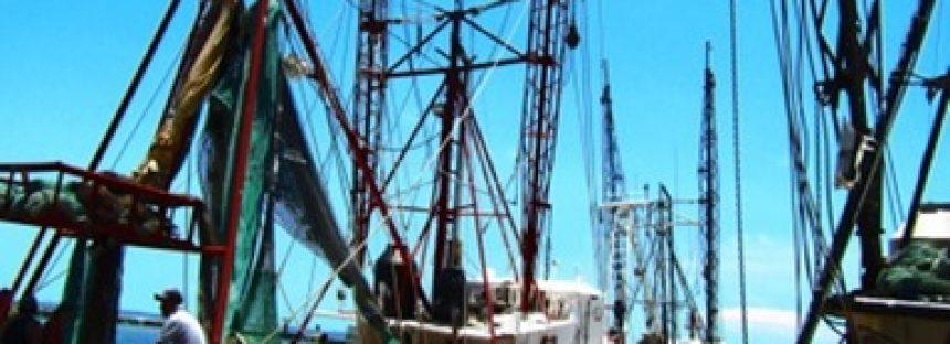 Verifican uso de dispositivos excluidores de tortugas en barcos camaroneros en el Caribe