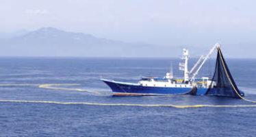 Inicia veda temporal para pesca de atún en México