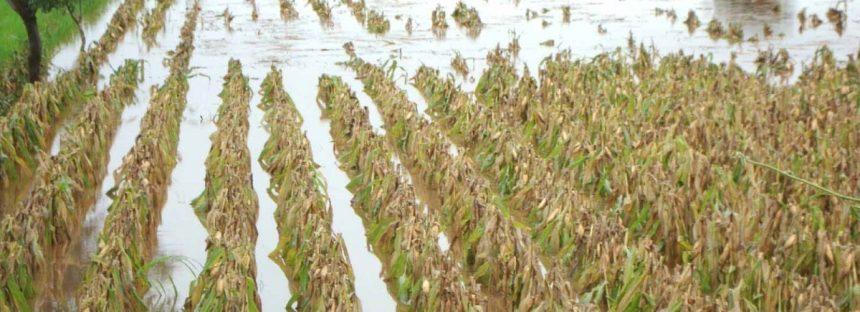 La SEDRUA asegura más de 751 mil hectáreas de cultivos