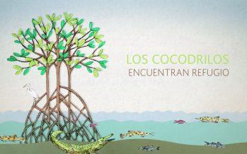 Manglares, ecosistemas complejos