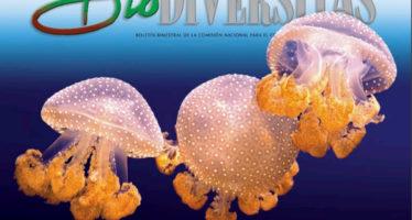 Medusas: Las bailarinas del mar