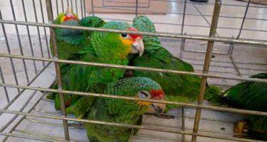 Comercio legal y sustentable de especies silvestres: Controversial investigación de científica de la UNAM