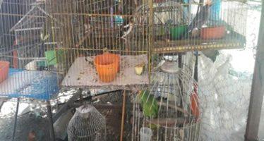 Decomisan a traficante de fauna en Tabasco, 6 loros y 24 tortugas