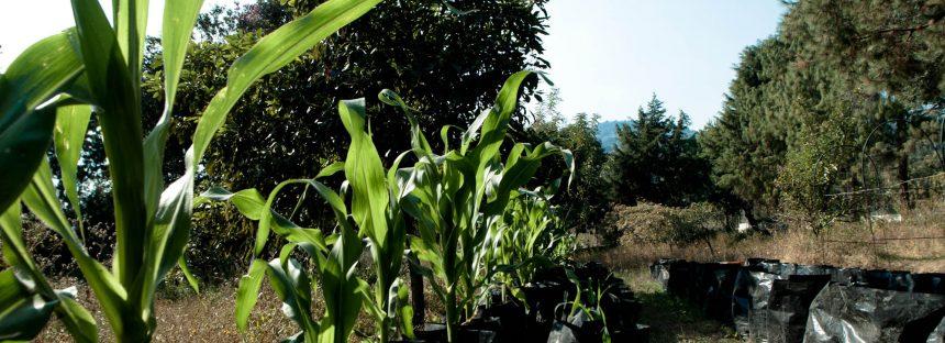 Milpa Sustentable: la UNAM despliega su propia Cruzada contra el Hambre