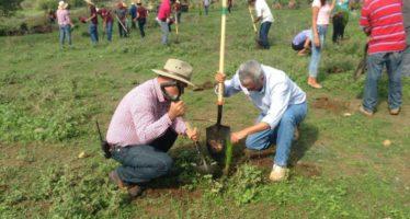Plantarán 10 mil pinos en Parácuaro