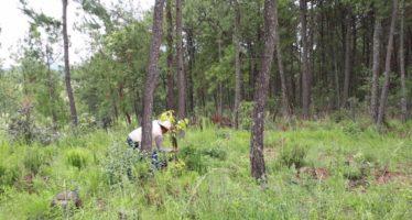 Operativo contra huertas ilegales de aguacate en zona lacustre de Pátzcuaro en Michoacán
