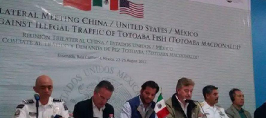 """México, Estados Unidos y China acordaron """"urgentemente"""" crear un grupo trinacional de fuerza para combate al tráfico ilegal de totoaba"""