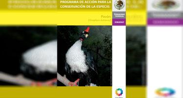 Programa de acción para la conservación de la especie: Pavón (Oreophasis derbianus)