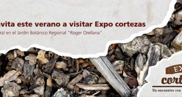 En Mérida, un encuentro con la piel de los árboles: Expo cortezas
