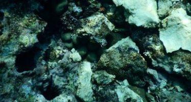 El buque Antares daña más de 4 mil m2 del arrecife Lobos-Tuxpan