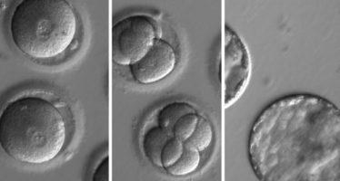 Once organizaciones científicas apoyan la edición genética de embriones pero pide que no se implanten