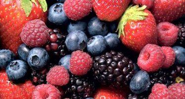 Michoacán en el primer lugar nacional como productor de berries