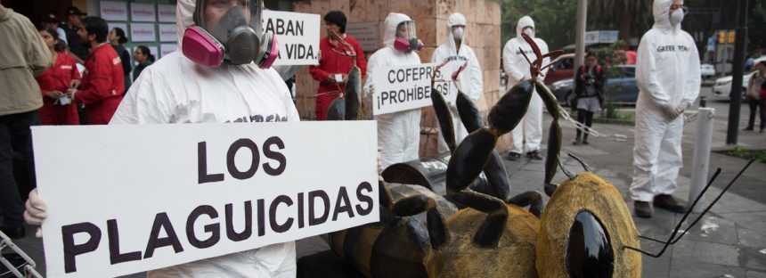 Greenpeace presenta denuncia ante la Cofepris, debido a mal uso de plaguicidas