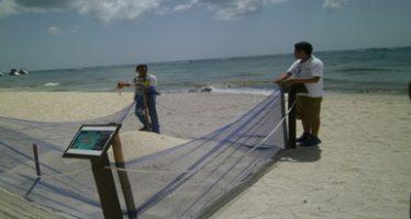 Hotel Secrets de de Cozumel es multado por Profepa por manejar y liberar crías de tortuga marina sin permiso