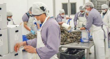 El TLCAN alienta el crecimiento de exportación agroalimentaria y pesquera de México
