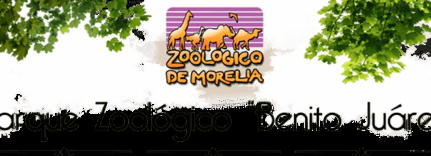Atienden emergencia veterinaria de un búfalo cafre en el Parque Zoológico de Morelia