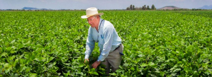 En México, aumentó la producción agrícola 11 por ciento en los últimos cuatro años