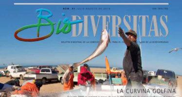 Biodiversitas: La curvina golfina