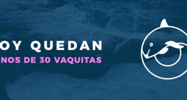 Inminente extinción: menos de 30 ejemplares la población silvestre de vaquita marina (Phocoena sinus)