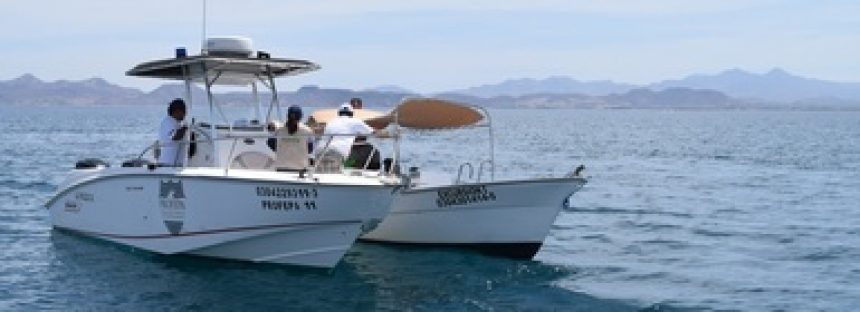 Severa sanción y multa a dos personas por realizar ilegalmente servicio de observación de tiburón ballena (Rhincodon typus),