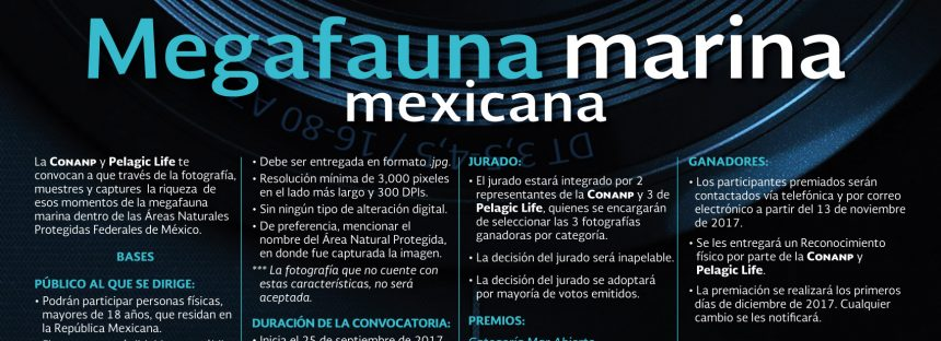 Concurso de fotografía: Megafauna marina mexicana
