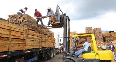 Madereros michoacanos donan madera legal a familias damnificadas por sismos