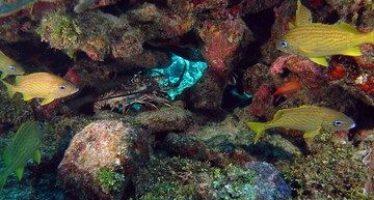 Casi 70 millones de hectáreas constituyen los ecosistemas marinos del país